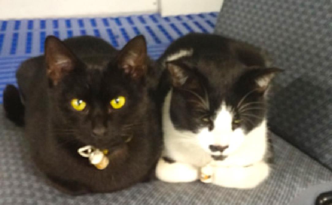 看板猫たちがお出迎えしてくれます。「待ってるにゃ~♪」